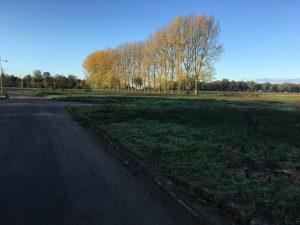 Bomen Nesciopark Haren